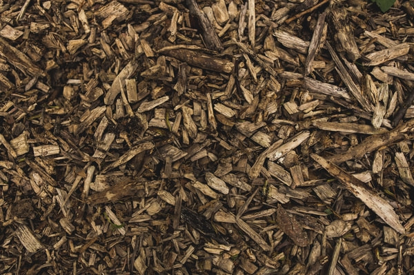 Organic mulch helps fertilize the soil and regulate temperature.